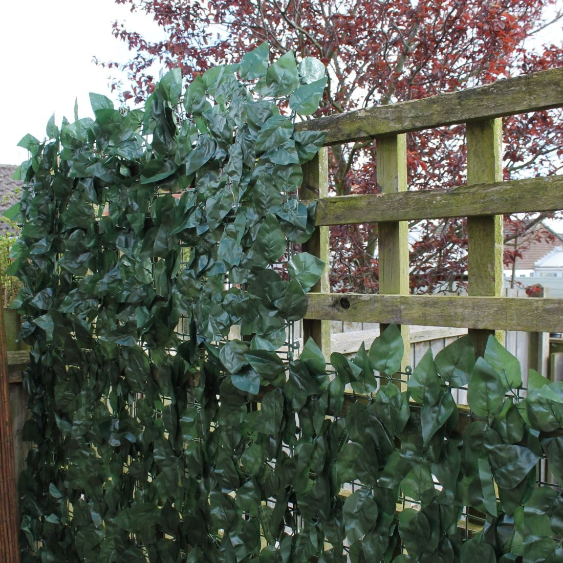 Thin fence ivy screening solutions