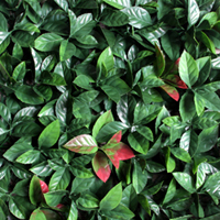 Artificial Landscape Leaves Hedge G0602A002