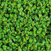 Artificial Landscape Leaves Hedge G0602A011yellow